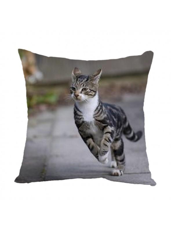 Squared cusion with a cat - Gatto